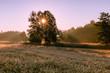 Drzewo w promieniach słońca 1