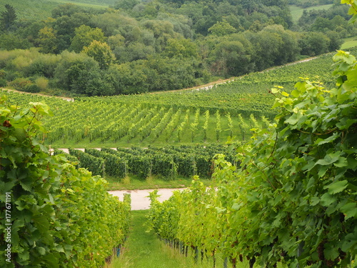In de dag Lime groen vineyard