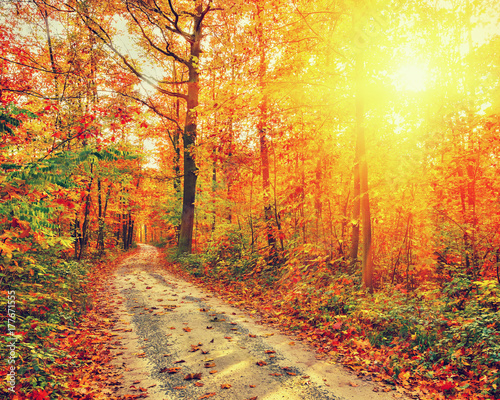 Foto op Canvas Herfst Pathway in the autumn forest
