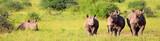 Fototapeta Sawanna - rhinos at the nairobi national park