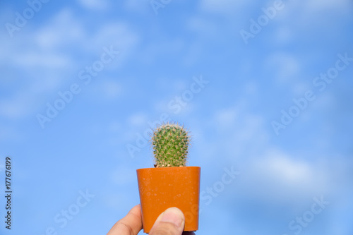 Small Green Cactus On Red Plastic Vase Carrt With Hand And Blue Sky