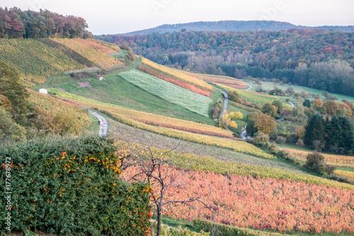 Zdjęcie XXL Winnice na jesieni