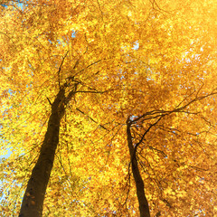 Fototapeta Las Autumn in the forest