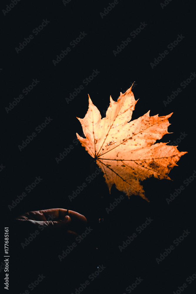 Fototapeta autumn mood