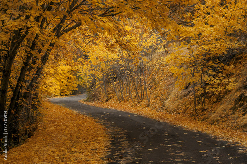 Photo Leaves on bend in road | Oregon
