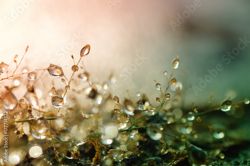 Dew drops on grass and blurred bokeh background Wallpaper Mural