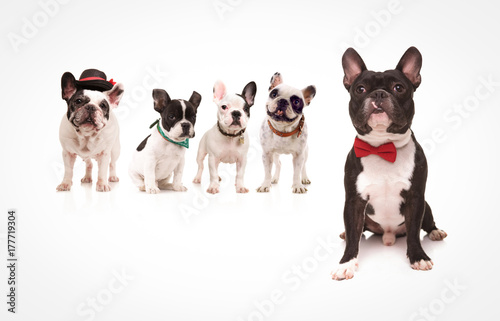 seated french bulldog wearing red bowtie in front of dogs