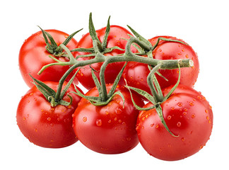 Big branch of fresh red tomato with green leaves with water drops