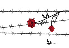 Rose With Barbed Wire