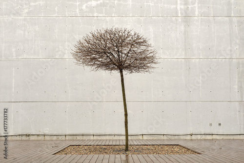 Poster Graffiti Lonely tree on a rainy day near the wall