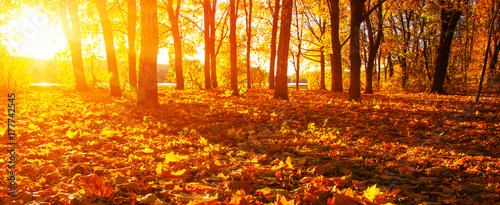 Spoed Fotobehang Meloen fallen leaves in autumn