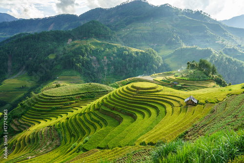 Terraced rice field in harvest season in Mu Cang Chai, Vietnam. Mam Xoi popular travel destination.