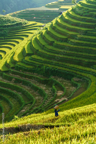Recess Fitting Rice fields Terraced rice field in harvest season in Mu Cang Chai, Vietnam. Mam Xoi popular travel destination.