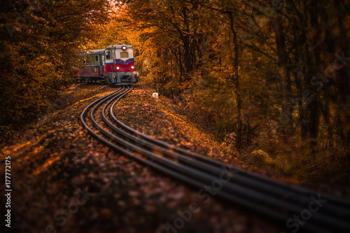 Canvas Prints Railroad Budapest, Hungary - Beautiful autumn forest with foliage and old colorful train on the track in Hungarian woods