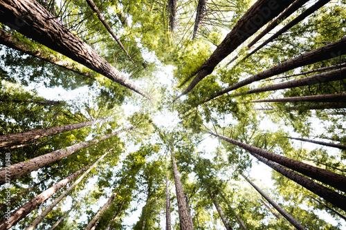 Papiers peints Arbre High woods in forest