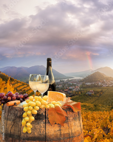 White wine with barrel on famous vineyard in Wachau, Spitz, Austria Canvas Print