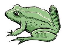 Toad, Amphibian Animal