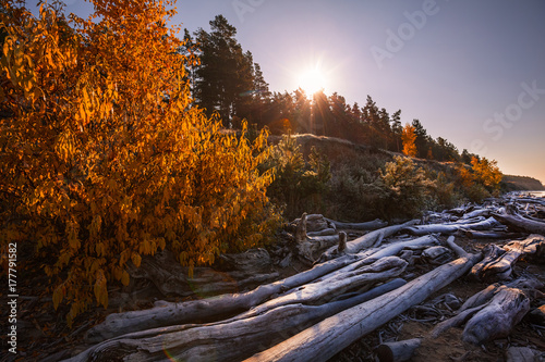 Tuinposter Zwavel geel The remains of the trees on the shore. The Ob River, Siberia, Russia