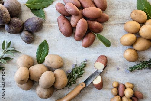 erbe aromatiche con patate di diverse varietà, una tagliata a metà con un piccolo coltello
