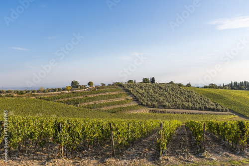 Papiers peints Vignoble Vineyards on the hills of Tuscany in the golden hour in Autumn in Italy
