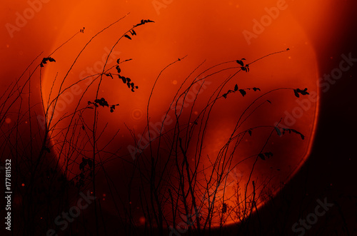 Canvas Prints Red plants at sunset silhouette against the setting autumn sky