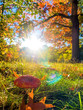 canvas print picture Herbstwiese