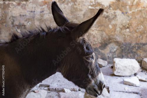 Poster Ezel donkey mountain