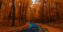 Road Through Dark Night Forest In Autumn