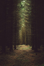 Light Shining On Dark Dense Forest Floor