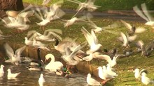 Numerous Seagulls, Geese, Duck...