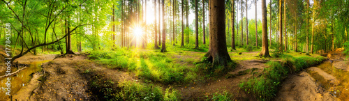 Papiers peints Forets Beautiful forest panorama with big trees and bright sun