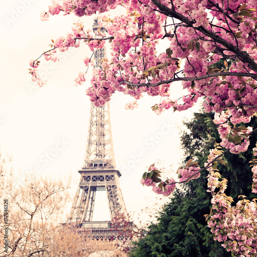 Eiffel Tower and Cherry blossoms in spring in Paris - 177846328