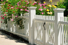 White Gate And Fence, Climbing...