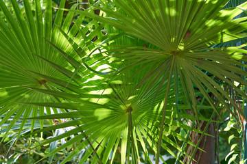 Fototapeta Eko Jungle rainforest in Riviera Maya