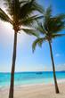 Akumal coconut palm tree beach Riviera Maya