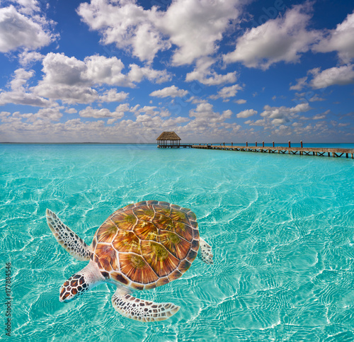 Photo Stands Turquoise Holbox Island beach trutle photomount Mexico