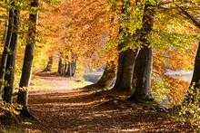 Herbstliche Buchenallee An See...