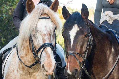 Fotografía  Zwei Reitpferde