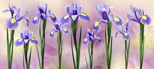 Fototapeta Kwiaty floresiris en fondo horizontal