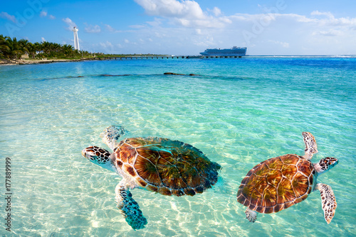 Spoed Foto op Canvas Caraïben Mahahual Caribbean beach turtle photomount