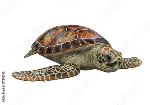 Fototapeta premium Żółw morski na białym tle