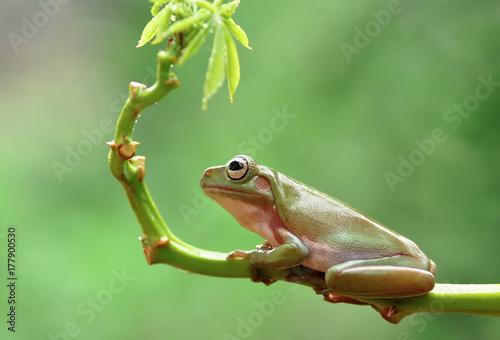 Photo Frog
