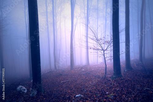 fantasy-purpurowy-blekitny-barwiony-mglowy-lasowego-drzewa-krajobraz