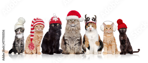Keuken foto achterwand Kat A group of cats sitting in a raw in a white background wearing christmas hats