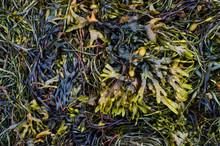 Quantity Of Seaweed