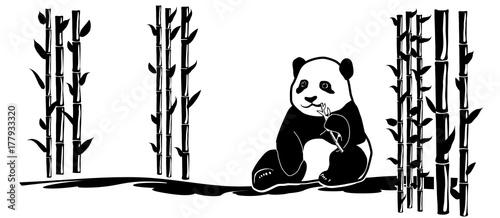 panda-pomiedzy-bambusami