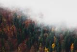 Jesień las i mgła, widok z góry - 177936935