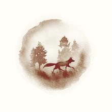 A Walking Fox In A Autumn Wate...