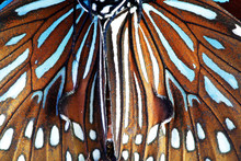 Close Up Of Beautiful Butterfl...