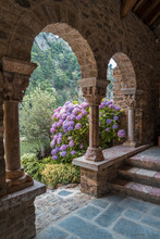 Hydrangeas Bush And Arch In The Romanesque Abbey Of Saint Martin Du Canigou
